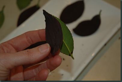 chocolate leaves 237