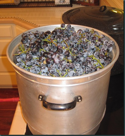 grape pressing 002