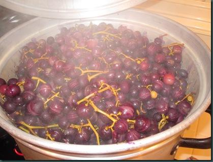 grape pressing 015
