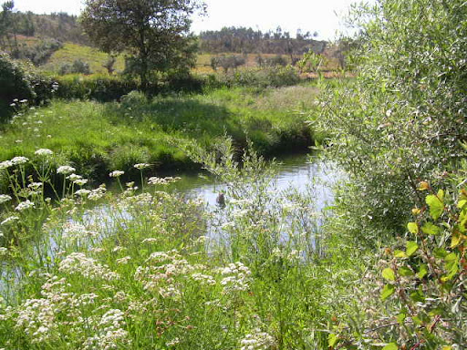 Um riacho lá por pé