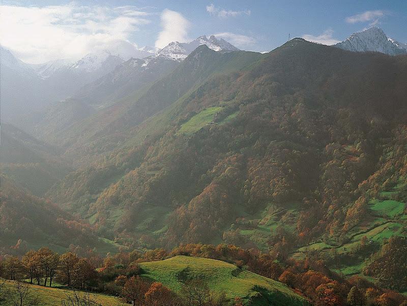 Bosque de Valgrande