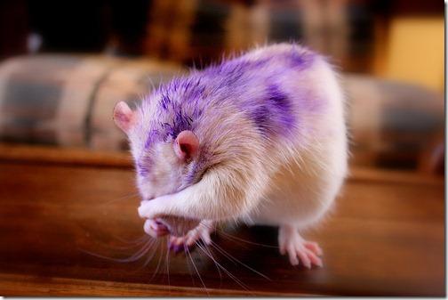 fotos de animais fofos e engraçados more freak show blog (20)