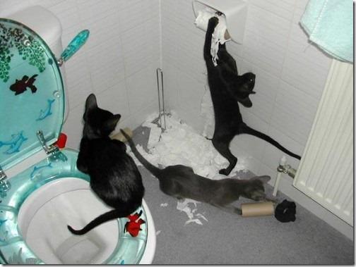 fotos de animais fofos e engraçados more freak show blog (33)