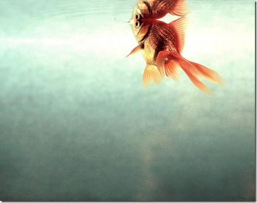 more freak show foto arte peixes fish (18)