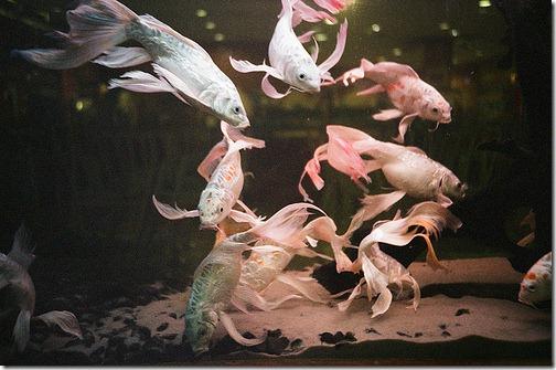 more freak show foto arte peixes fish (8)