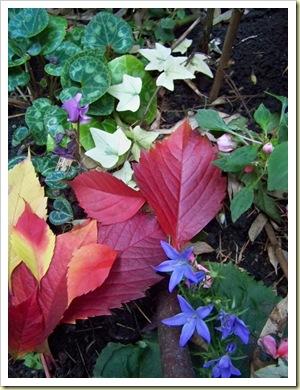 bouquet d'automne pour Diane