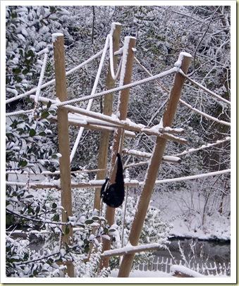 singe dans la neige