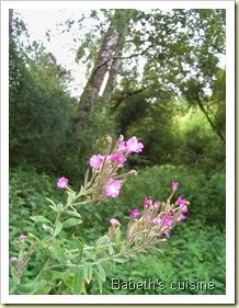 fleur forêt bretagne