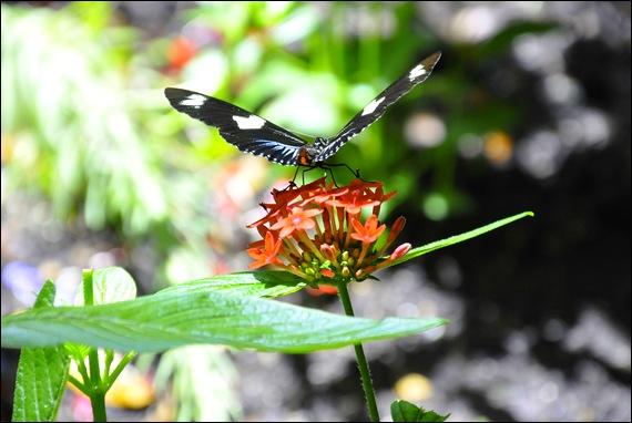 butterfly macro 3