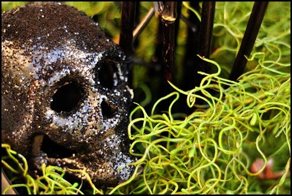 skull copy