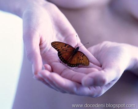 borboletamaos