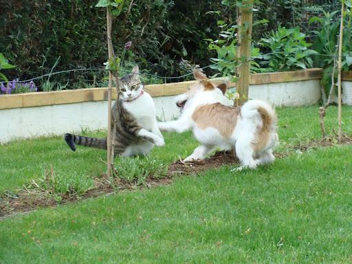 Pour les amoureux des chats - Page 2 DSC03833