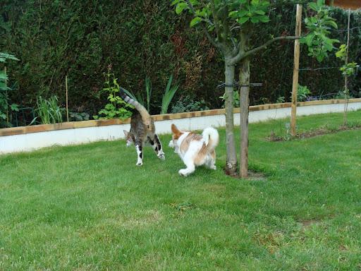 Pour les amoureux des chats - Page 2 DSC03825