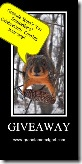squirrels006-1