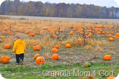 pumpkin patch, awana 090