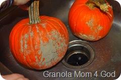 Pumpkins 001