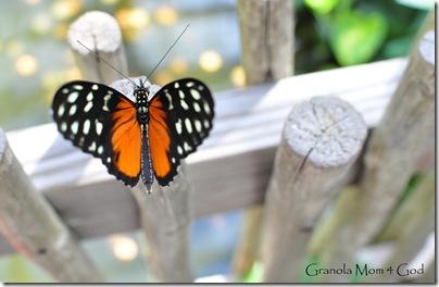 Butterfly zoo 022