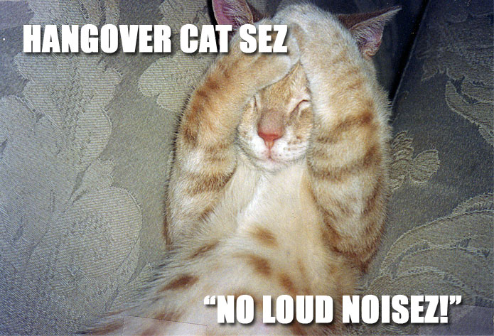 HANGOVER CAT SEZ NO LOUD NOISEZ!