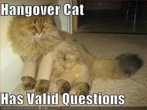 Hangover Cat Has Valid Questions