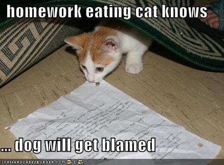 homework eating cat knows ... dog will get blamed
