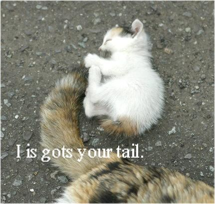 I is gots your tail