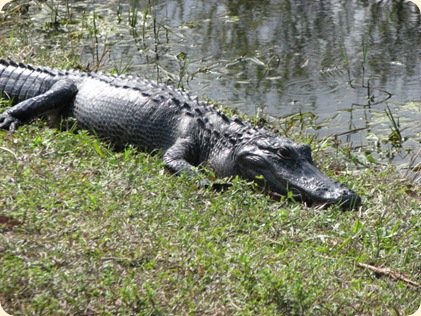 Everglades Highway 032
