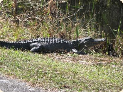 Everglades Highway 033