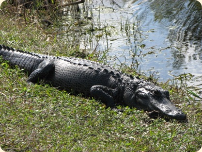 Everglades Highway 039