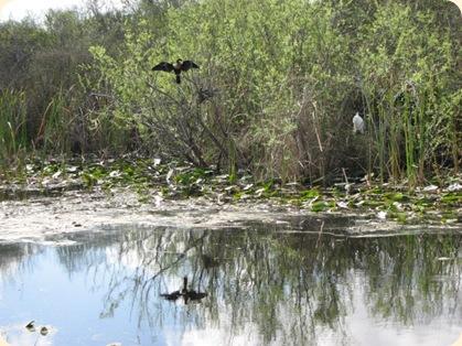 Everglades Highway 029