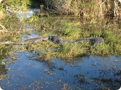 Everglades NP 120
