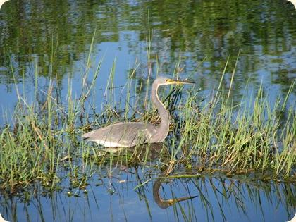 Everglades NP 091