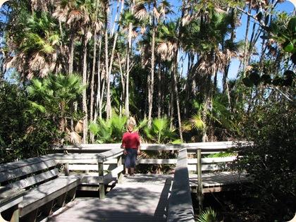 Everglades NP 052