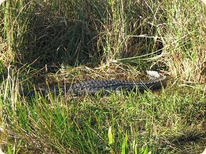 Everglades NP 109