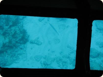 John Pennekamp Glass Bottom Boat 028