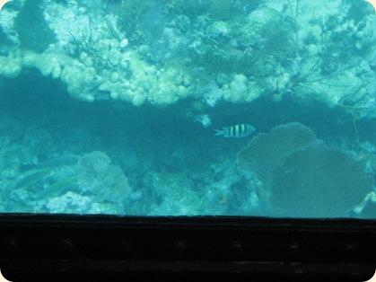 John Pennekamp Glass Bottom Boat 054