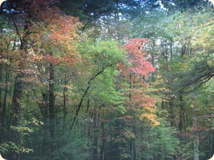 Fall Creek Falls SP 028