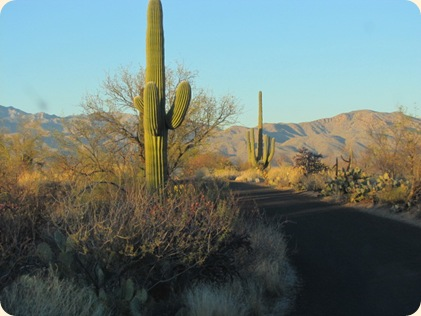 Saguaro National Park 083
