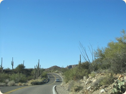Saguaro National Park 006