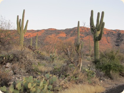 Saguaro National Park 100