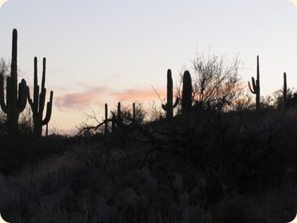 Saguaro National Park 107