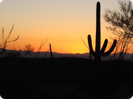 Saguaro National Park 110