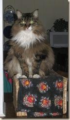 Fat Cat 20100214_0022