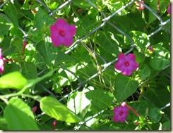Mrs. Bush's Plant