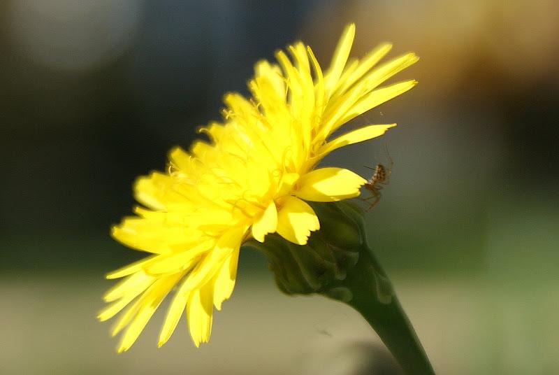 Flor, amarela