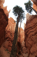BryceCanyonNP_20100818_0302.JPG Photo