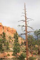 BryceCanyonNP_20100818_0323.JPG Photo