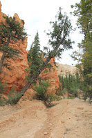 BryceCanyonNP_20100818_0178.JPG Photo