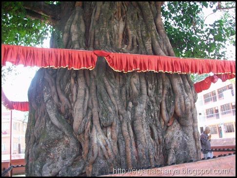 Dhumra Baraha, Back side