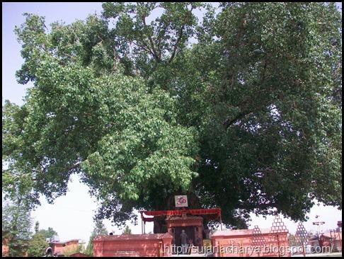 Dhumra Baraha (12)