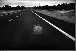 Tumbleweed (VancityAllie)